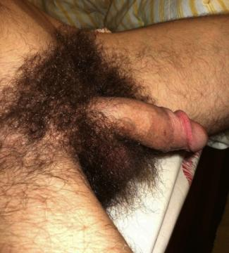 hairy cocks