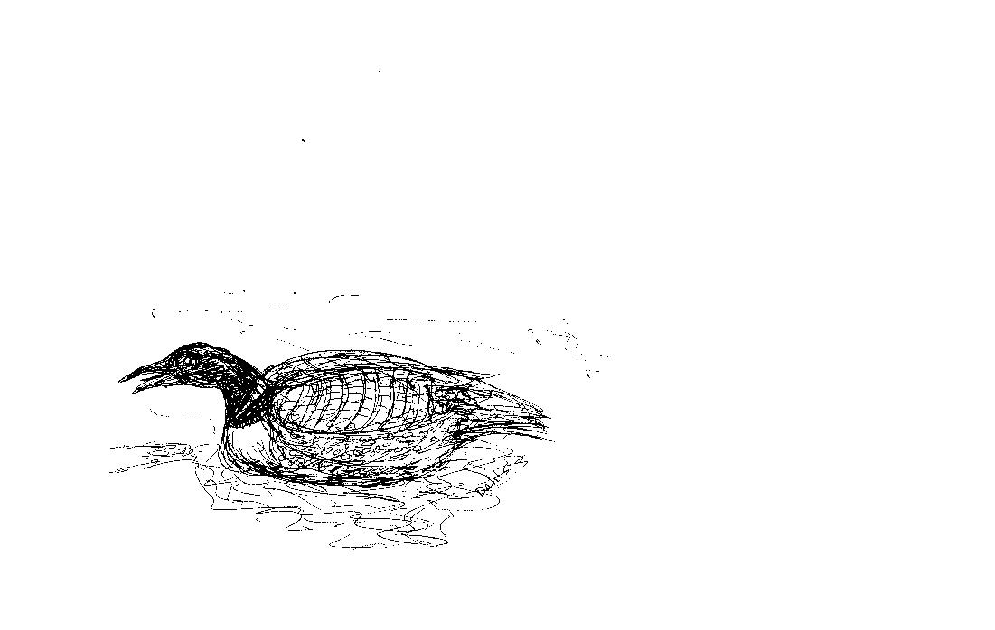 LOON HAIKU, poem by Isabel Jackson, Sept 2017