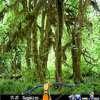 Games : Hidden Targets Nature