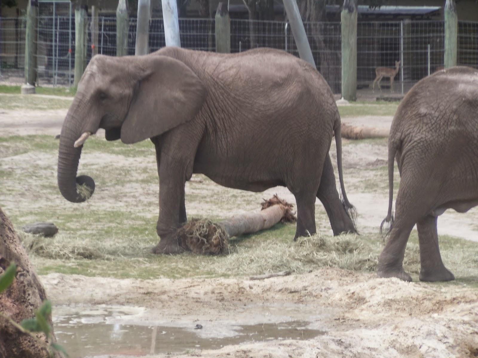 zoo animals activities for kids a is for adventures of homeschooling