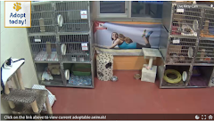 BC SPCA Live Kitty Cam