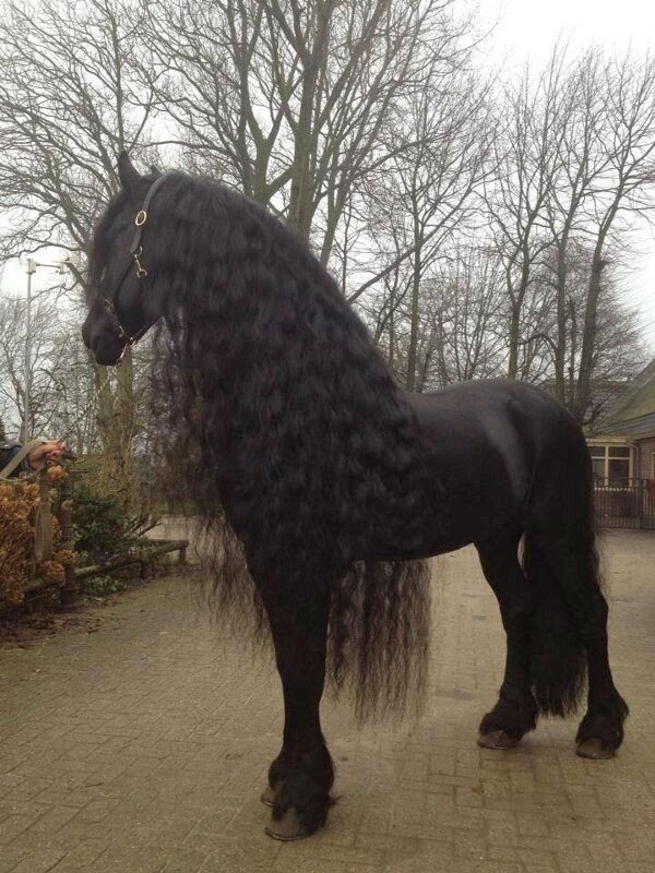 Funny animals of the week - 21 March 2014 (40 pics), funny animal pictures, beautiful black horse