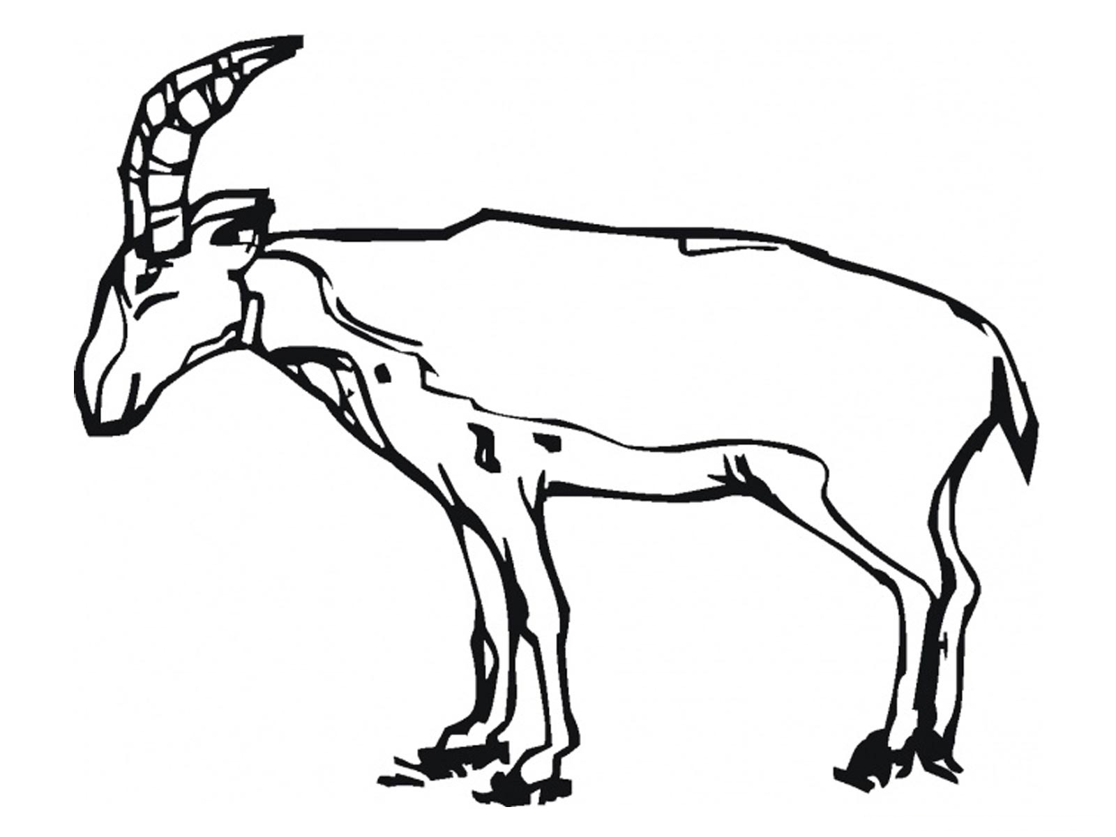 antelope coloring pages - photo#18