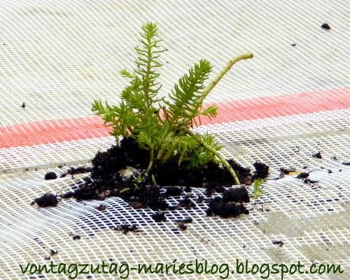 http://vontagzutag-mariesblog.blogspot.co.at/2013/11/ein-flachdach-begrunen.html