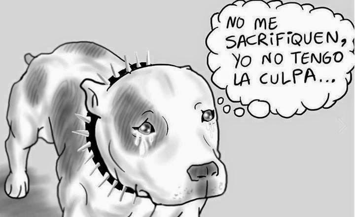 Violência animal