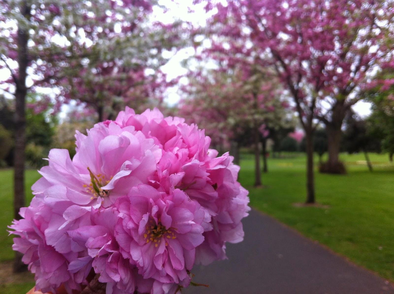 primavera em dublin, na irlanda