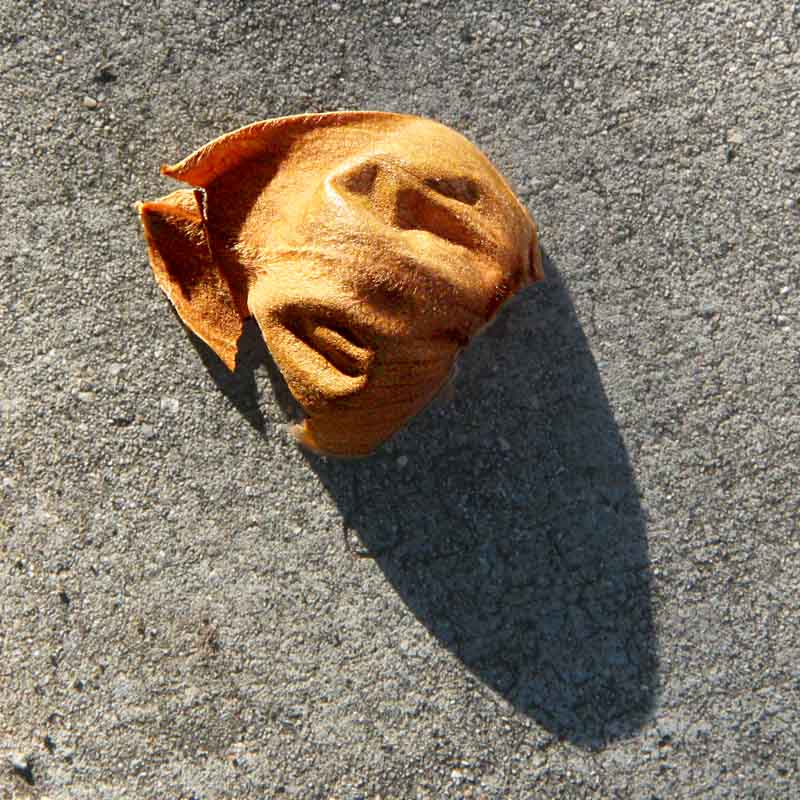 leaf on the sidewalk reminds me of the Face on Mars (c) David Ocker