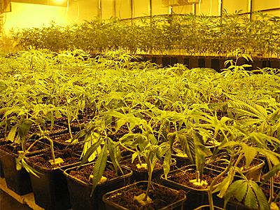 Interior marihuana marzo 2012 for Cultivo interior marihuana