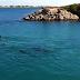 Κολυμπώντας με τα δελφίνια....