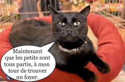Jolie chatte noire en exposition.