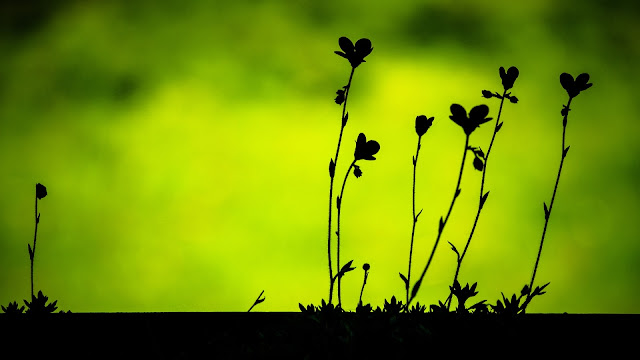 Plant silhouettes HD Wallpaper