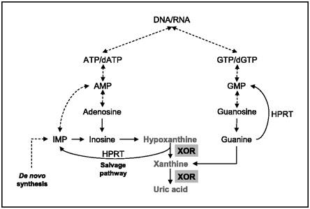 Uric Acid Pathway Case Studies | ...