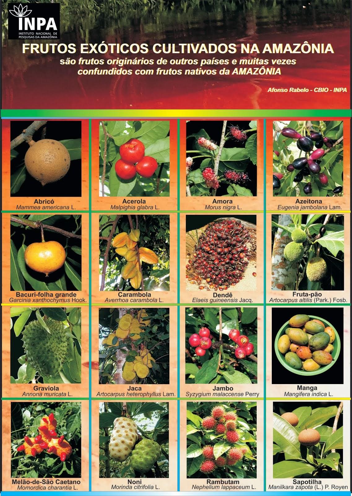 Frutos exóticos cultivados na Amazônia