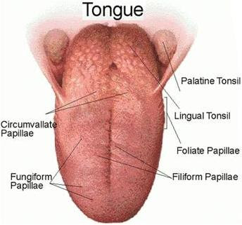 health amp fitness tongue cancer causes