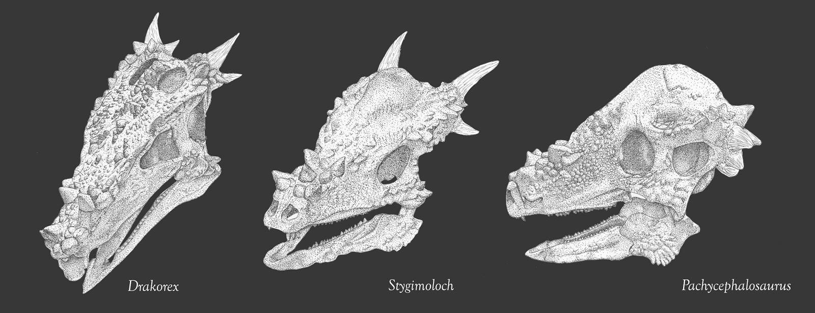 Evolutionary Vertebrate Zoology March 2013