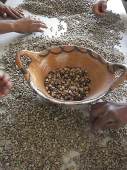 Sorting Untoasted Coffee Beans