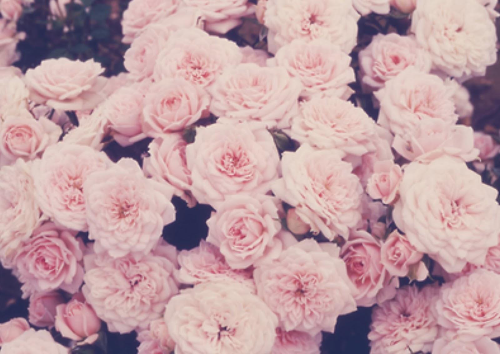 Pink Roses Tumb...