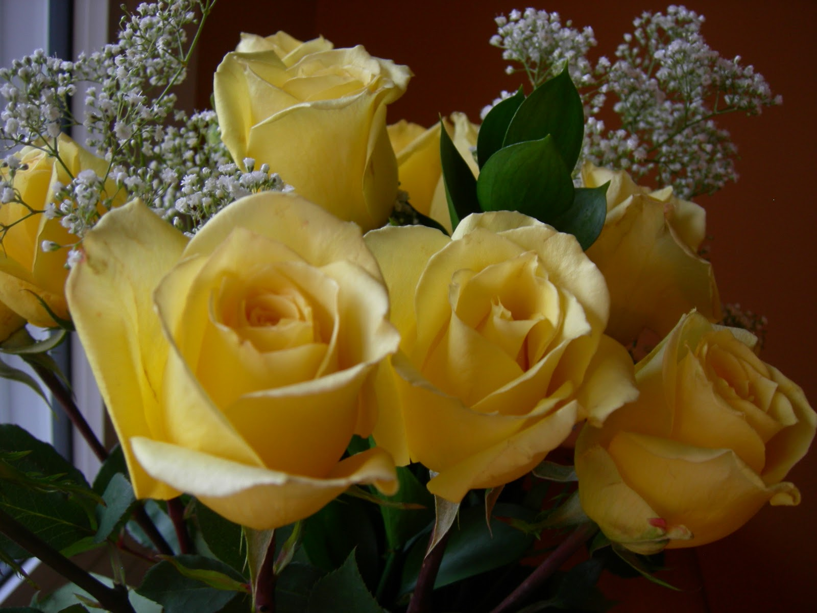 Yellow roses meaning the meaning of a yellow rose