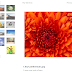 An ASP.NET Picasa Image Gallery