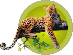 Yaguar (Panthera onca)