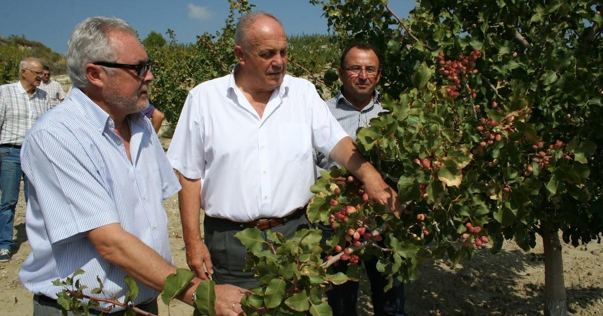 Ceheg n actualidad los pistachos se pueden cultivar en for Oficina comarcal agraria