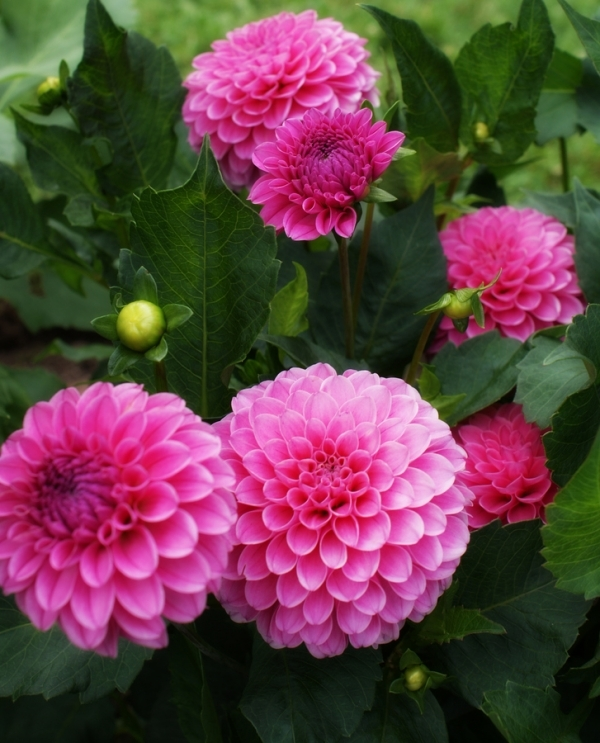 Exotic flowers flowers world pink flowers mightylinksfo