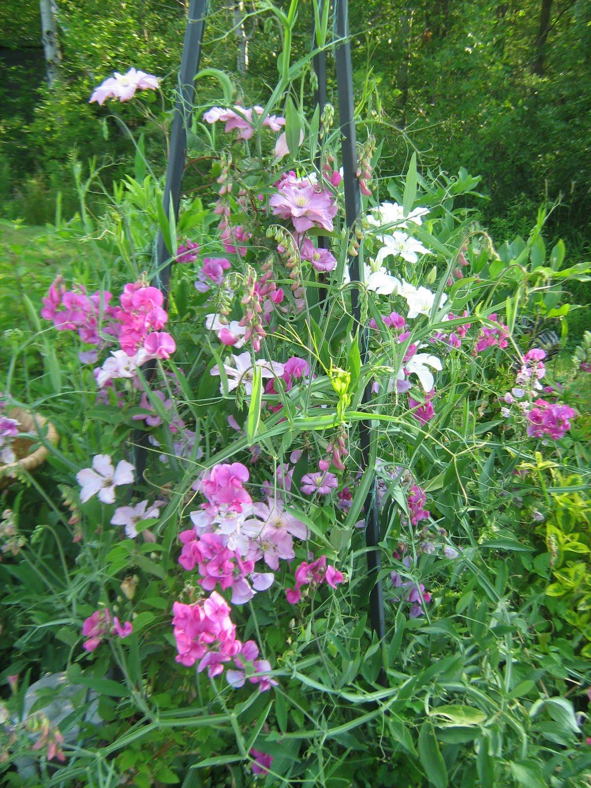 the musical gardener mid summer flowers. Black Bedroom Furniture Sets. Home Design Ideas
