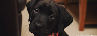Cute Black Baby LabraDOG FB Cover