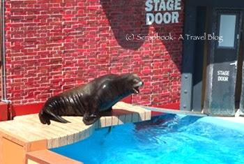 San Diego Sea World Sea lion Show