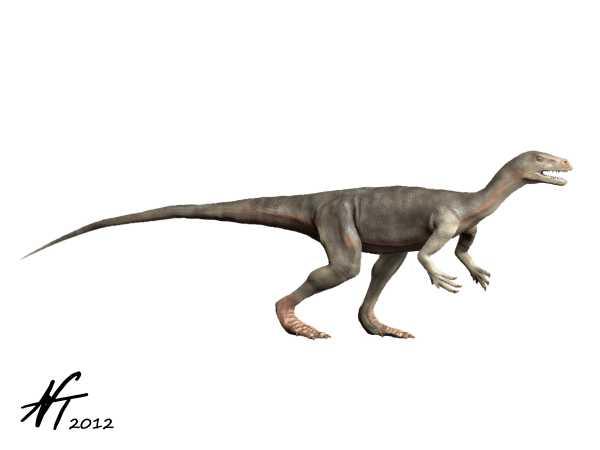 [Image: Nyasasaurus_NT.jpg]