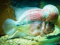 Benarkah, Makan Ikan Dapat Meningkatkan Kecerdasan Otak?