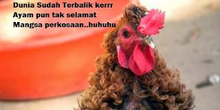 Remaja Perkosa Ratusan Ayam!!