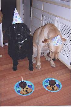 Everyone deserves a birthday treat!