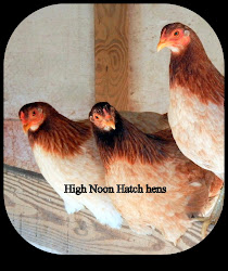 A trio of High Noon Hatch light phase hens