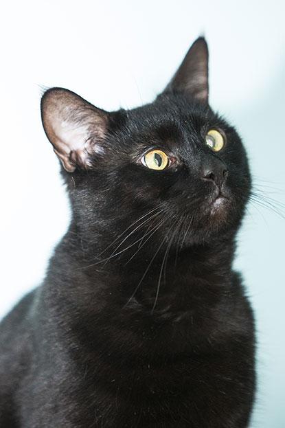 Black Cat Day Champion 2014