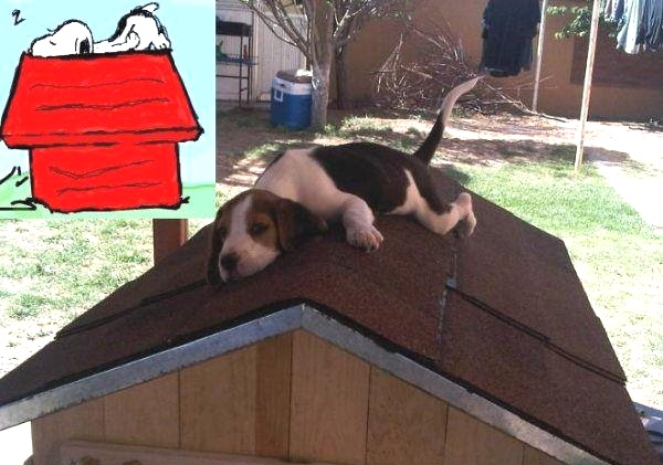 what time is oclock the real snoopy