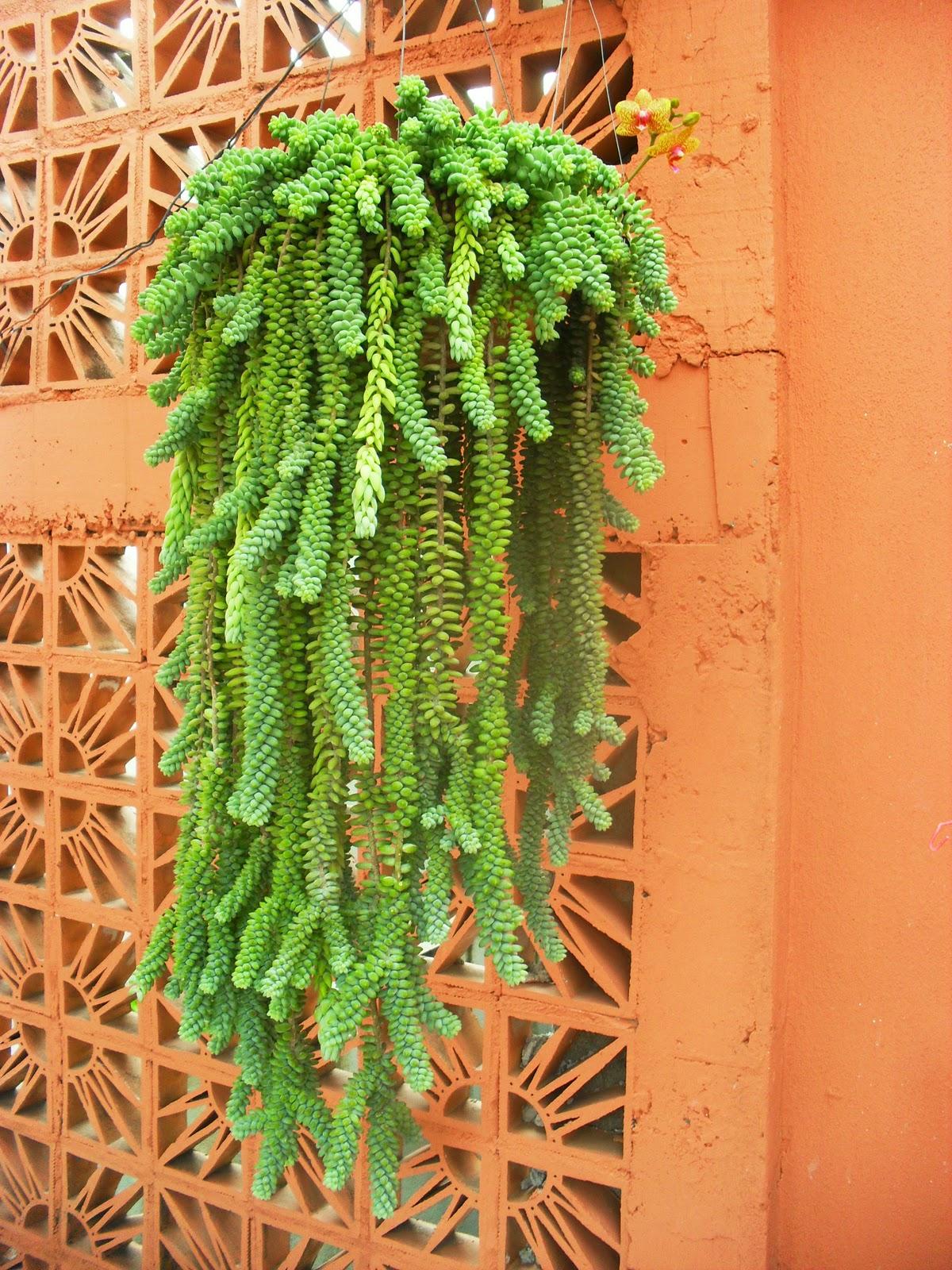 Jardim da terra inspira o plantas pendentes - Enredaderas de interior ...
