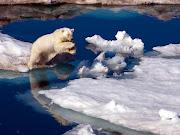 04/16/13Fotos Bonitas para el  (fotos de oso en el hielo)