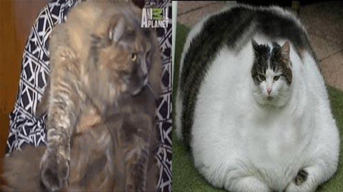Kucing Terbesar Di Dunia | Video Bokep Bugil
