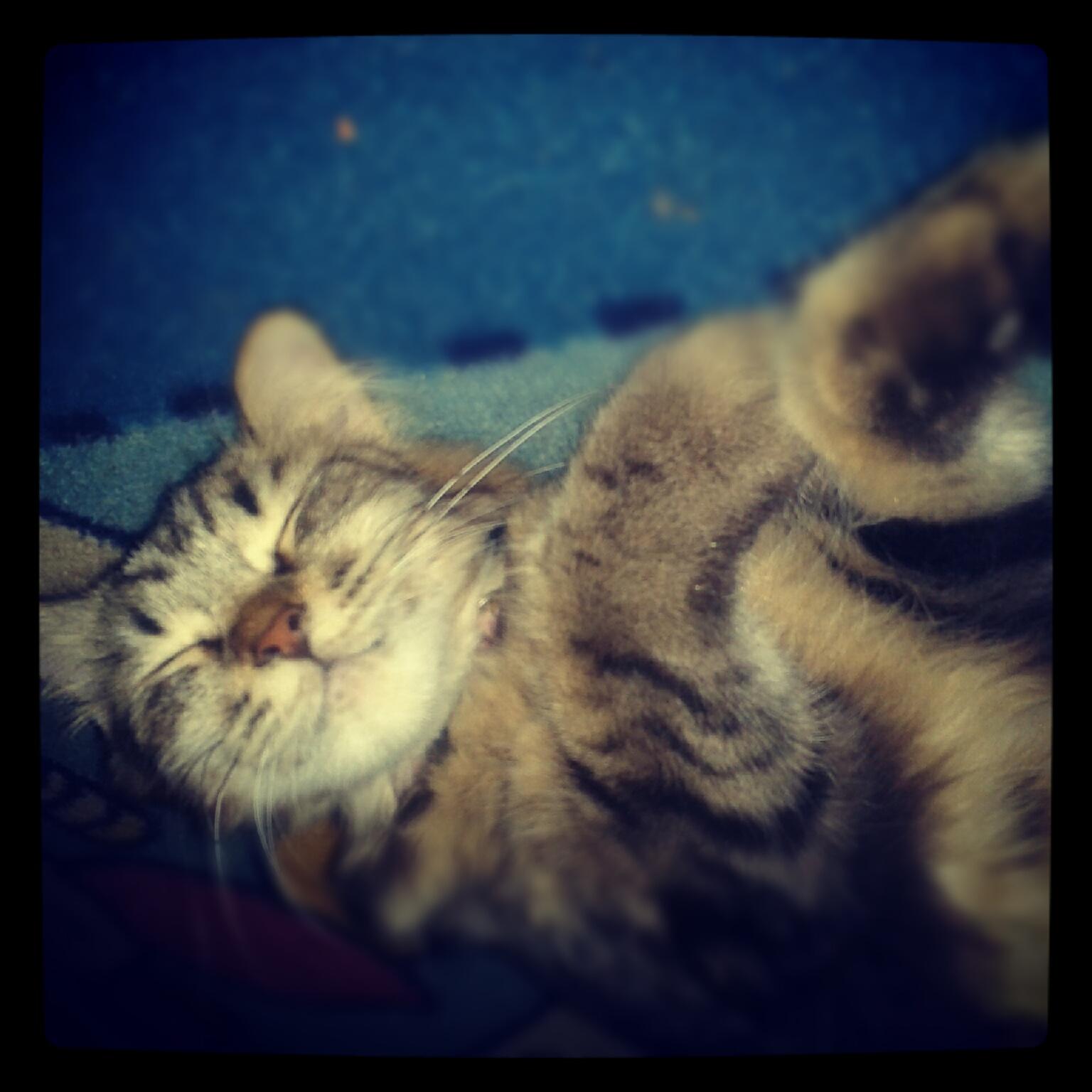 Jenis Kucing Anggora Dan Fotonya 20 Gambar Kucing Lucu