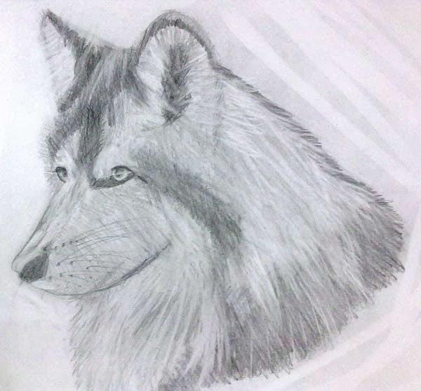 lobo en grafito