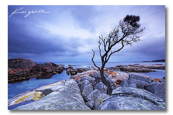 Binalong Bay Tree by Kane