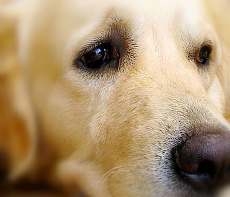 7 Anjing Terkaya yang Mendapat Harta Warisan dari Majikannya