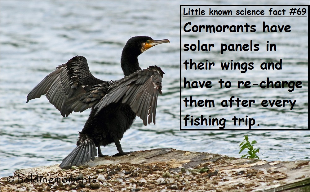 Science Fact