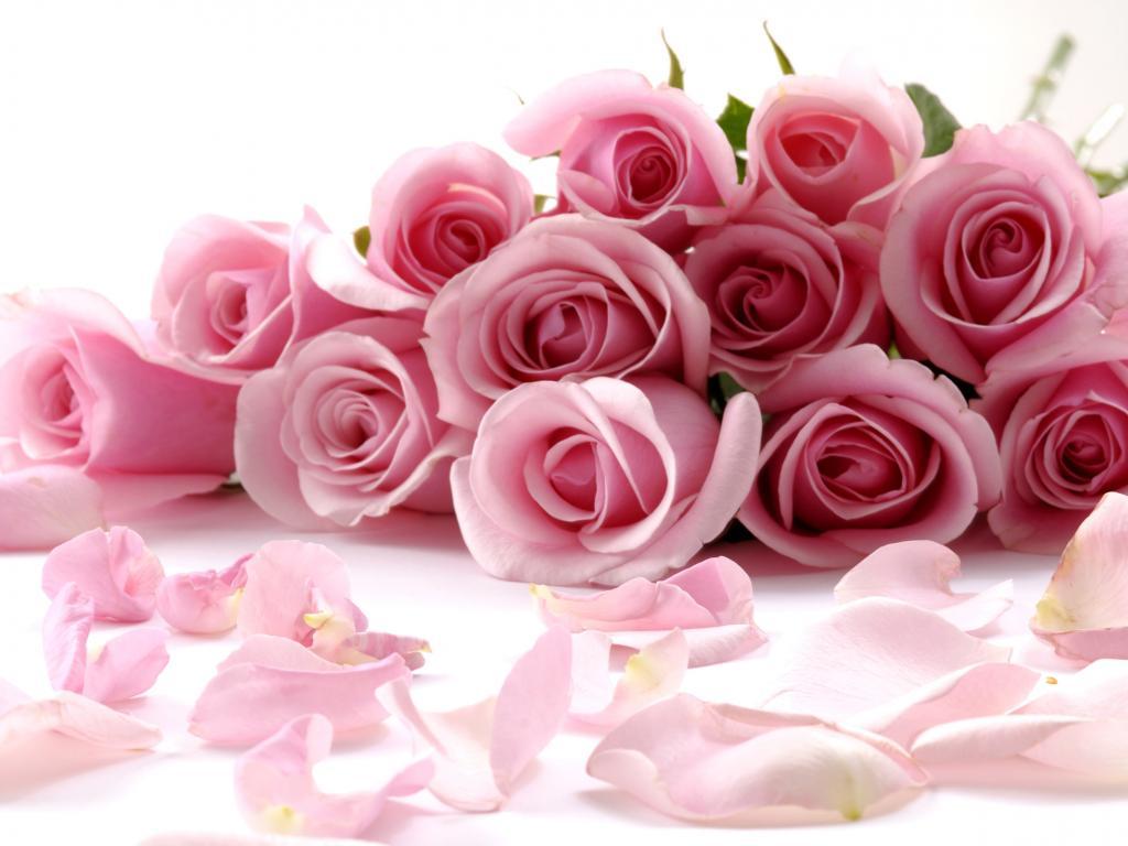 Flowers Beautiful Flowers Roses