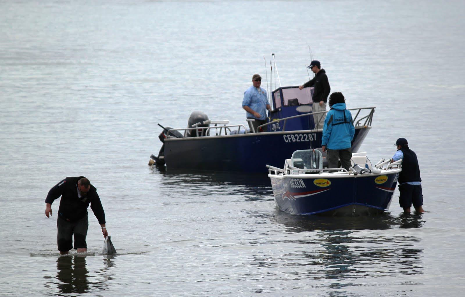 how to catch squid sydney