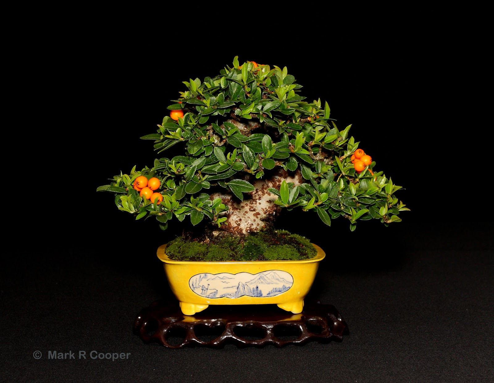 Bespoke Bonsai Stands Mark Amp Ritta Coopers Pyracantha At Capel Manor