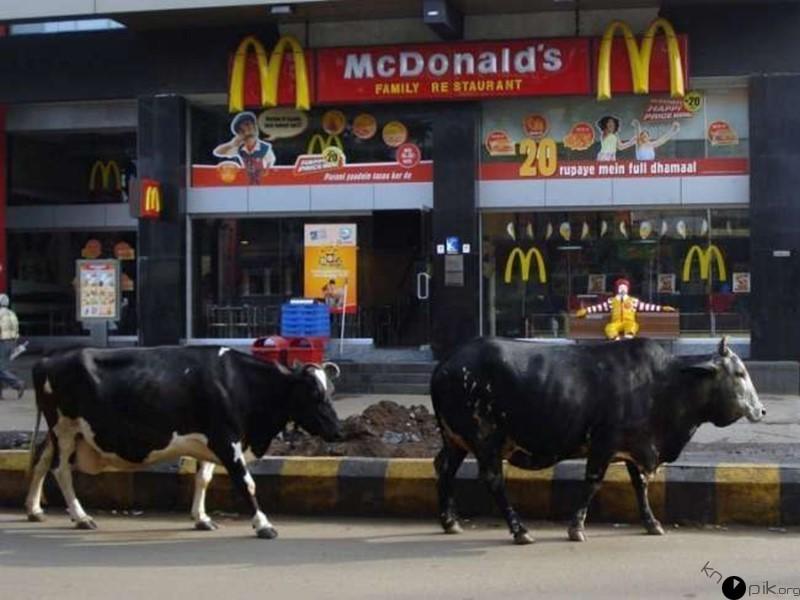 Такое можно увидишь только в Индии (20 фото)