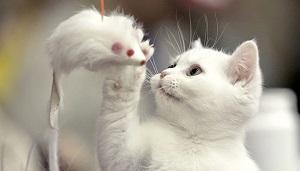 Gambar kucing ini sangat menarik