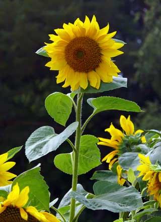 Maestra poppins flora y fauna de mesas de guadalora for Plantas ornamentales nombres